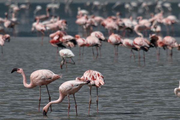 Villa Saravari Activities - Bird Watching